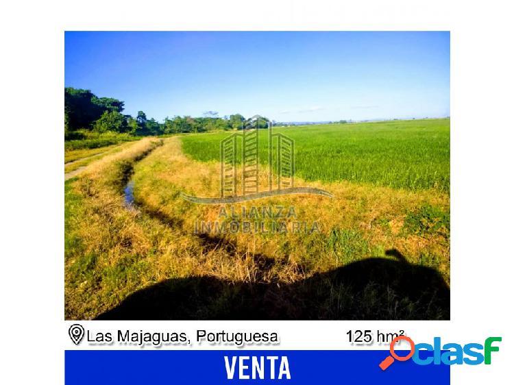 Finca de 125 hectáreas en las majaguas - edo. portuguesa