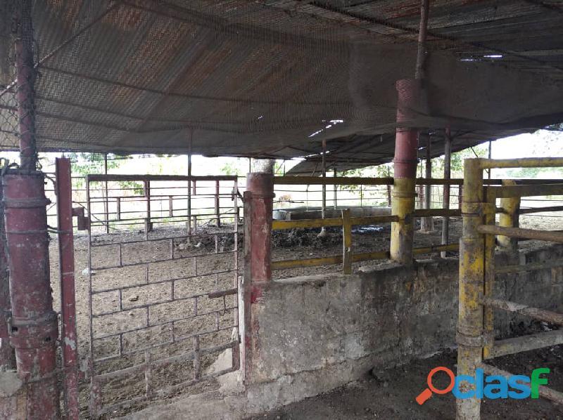 Fundo en venta en el Pao, sector Zambrano, Cojedes, ENMETROS2, 20 50011, asb 5