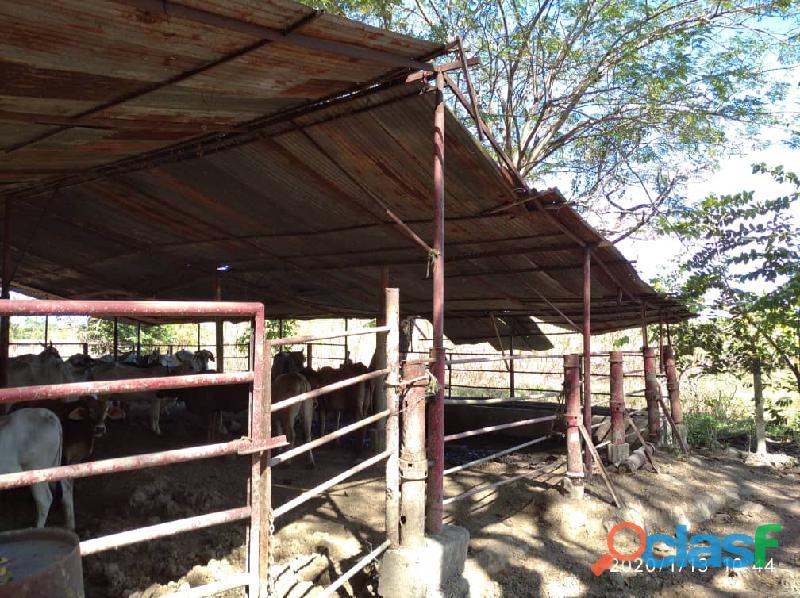 Fundo en venta en el Pao, sector Zambrano, Cojedes, ENMETROS2, 20 50011, asb 7