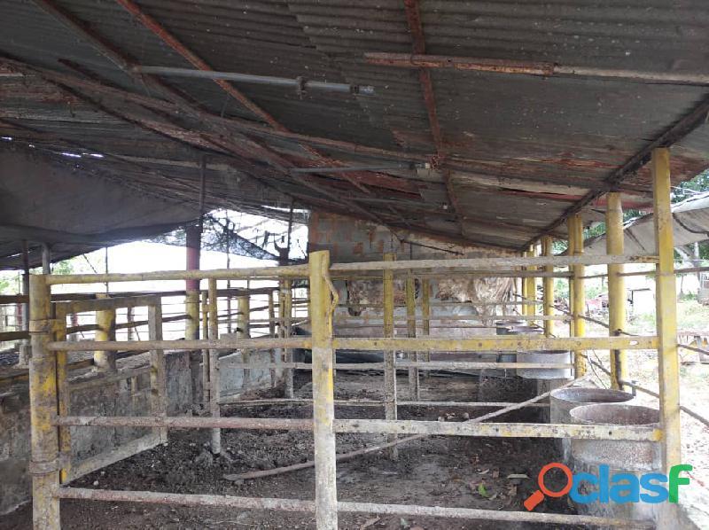 Fundo en venta en el Pao, sector Zambrano, Cojedes, ENMETROS2, 20 50011, asb 8