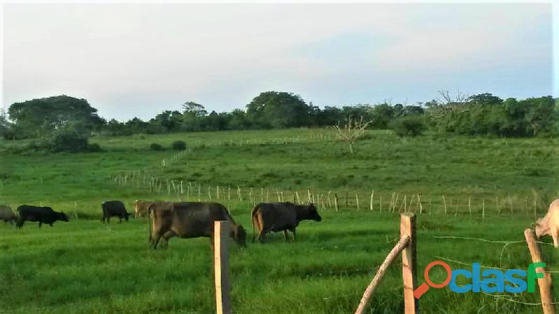 SKY GROUP Vende Terreno Agropecuario 5