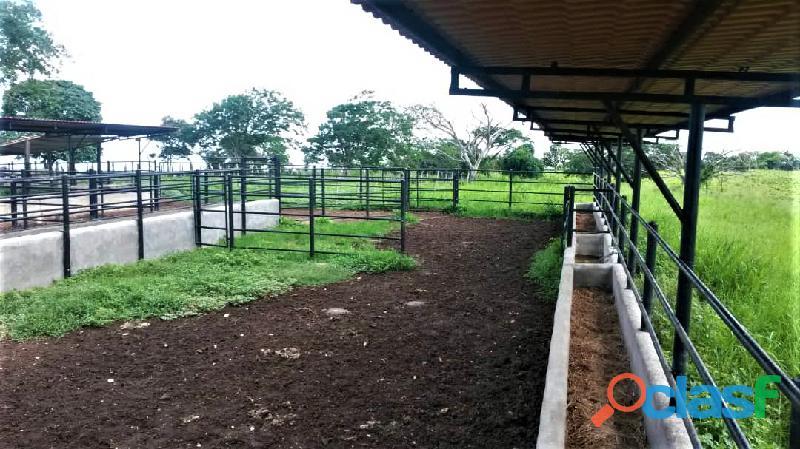 SKY GROUP Vende Terreno Agropecuario 18