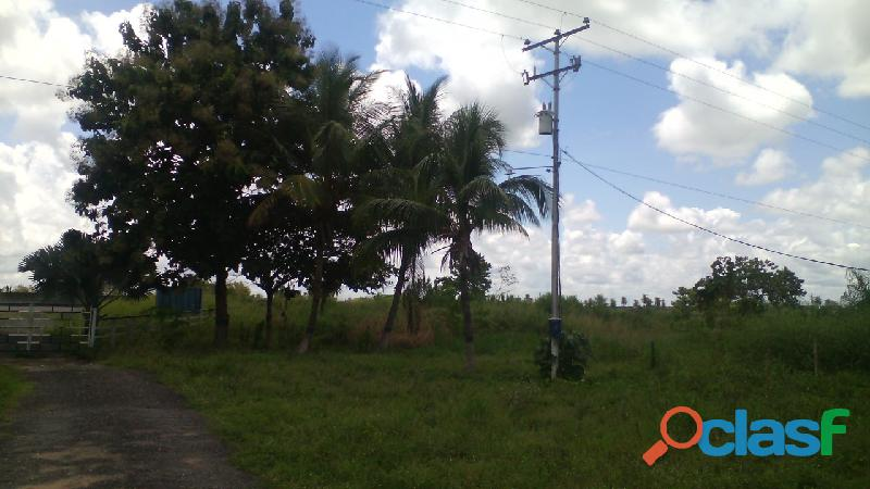VENDO FINCA GUANARE VENEZUELA