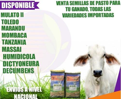 Semillas de pasto certificadas