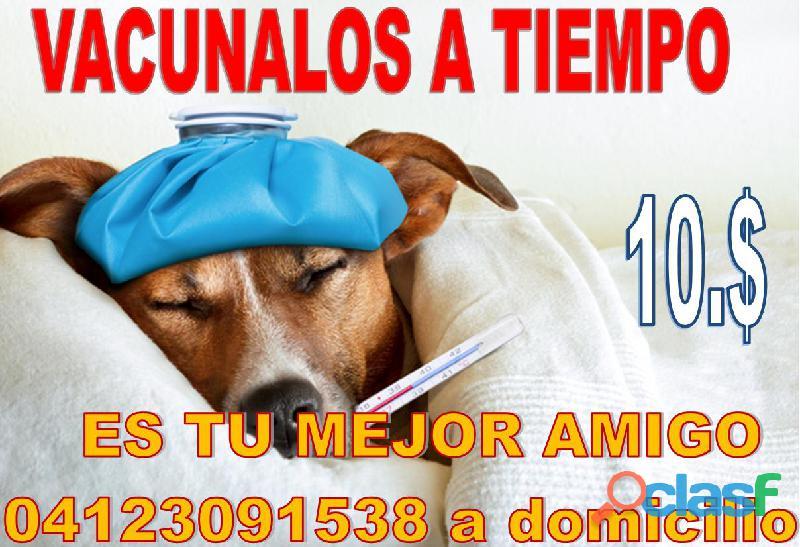Vacunas para perros a domicilio