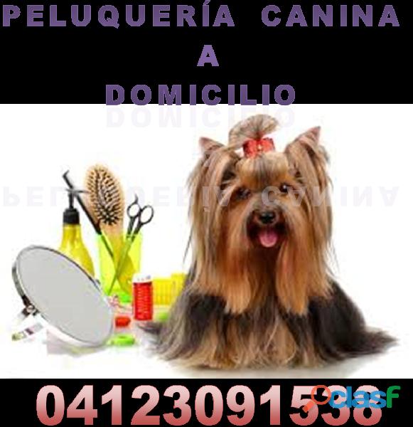 vacunas para perros a domicilio 1