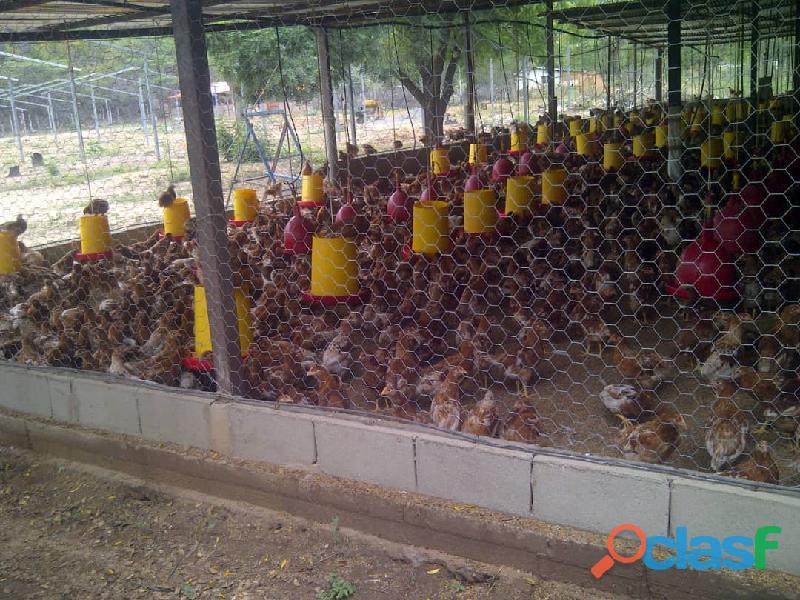 Venta Granja ideal para la cria de pollos o gallinas 1