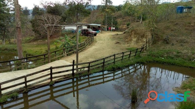Sky Group Vende Finca Agricola y Ganadera en Bejuma,Edo. Carabobo FOT 252